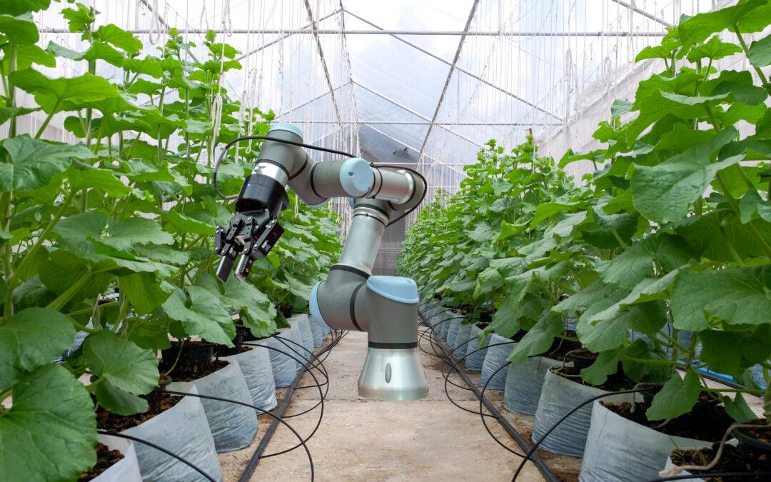 キュウリ自動収穫ロボット